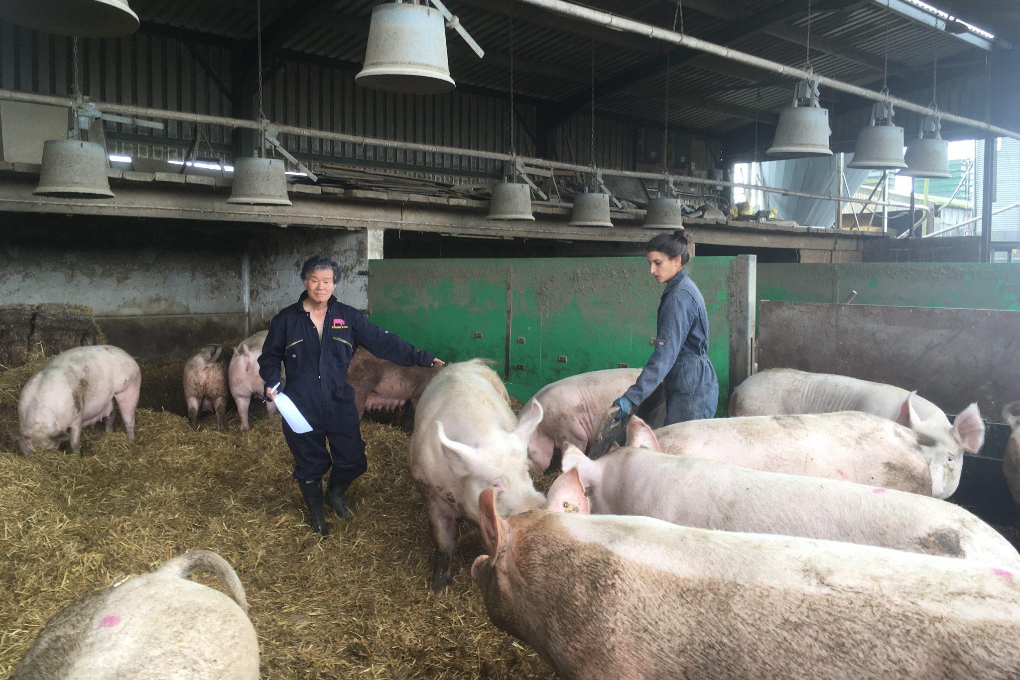 繁殖から肥育、精液の供給・生産・凍結 後輩で豚の肉質改善 新品種の開発に注力 アグー復活に寄与 独自ブランド造りも 桑原康さん・富士宮市