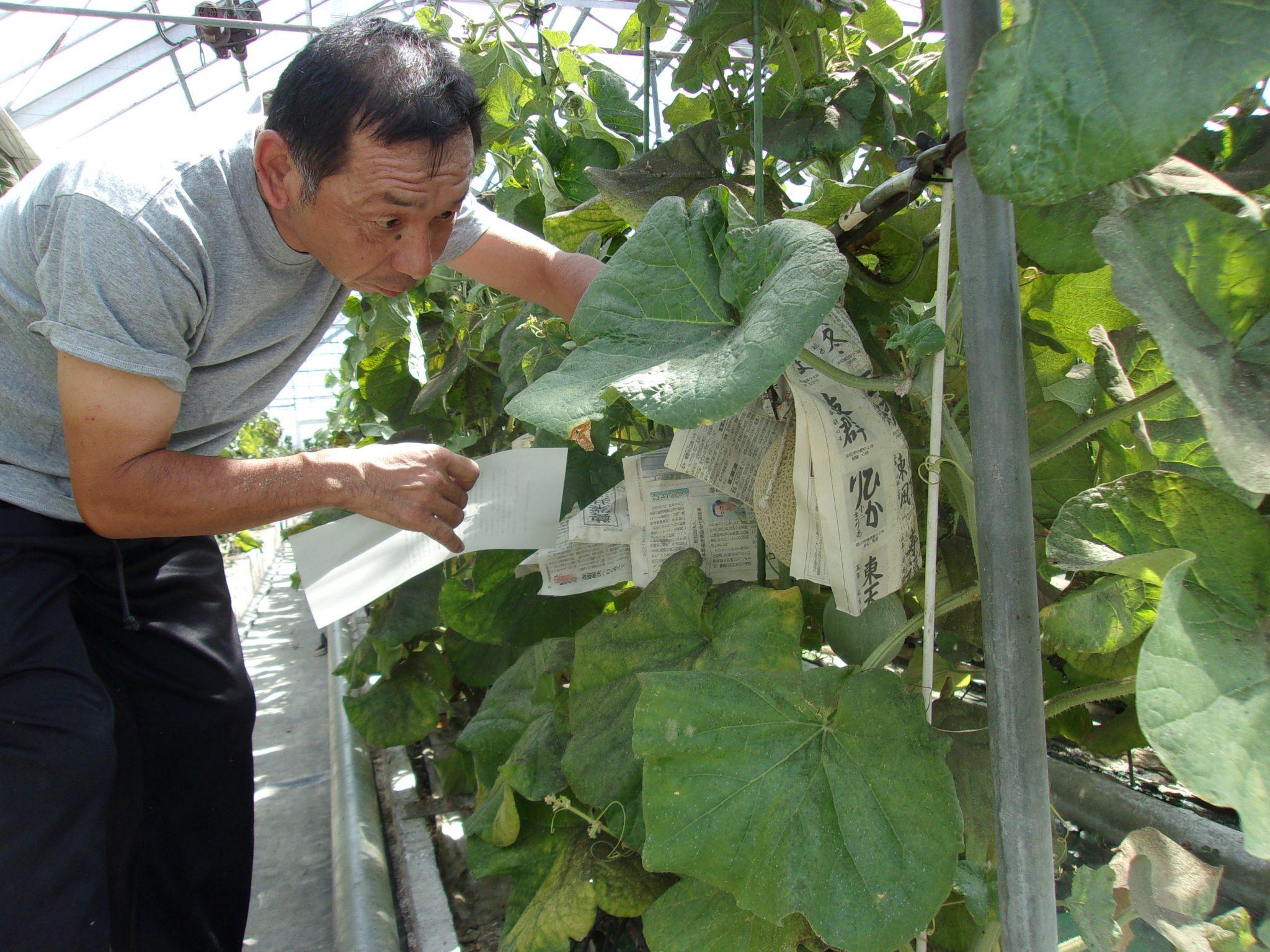 メロン養液栽培収入保険へ加入 災害時の長期停電に備え 久野英敏さん・袋井市