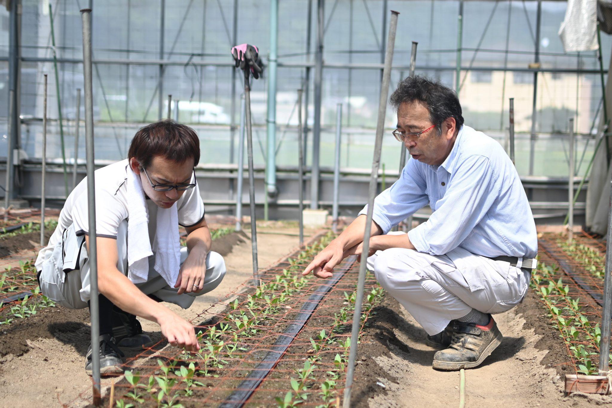 トルコギキョウ 高圧ナトリウムランプ使い花芽の枯死防ぐ 優れた技術で経営再興 静岡市・遠藤弥宏さん